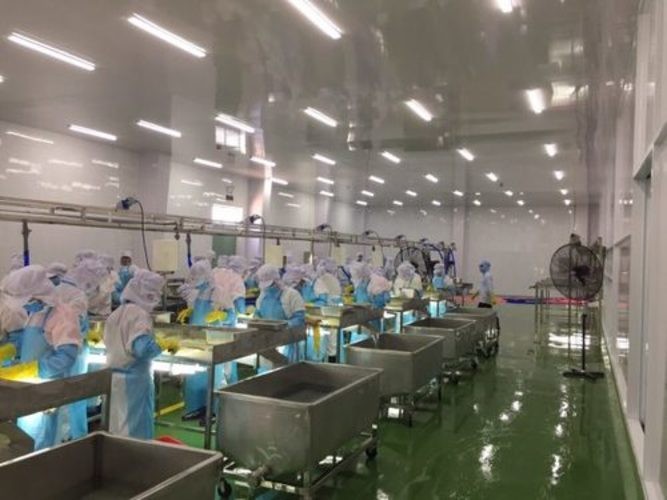 lắp đặt tấm nhựa công nghiệp tại nhà máy thủy sản
