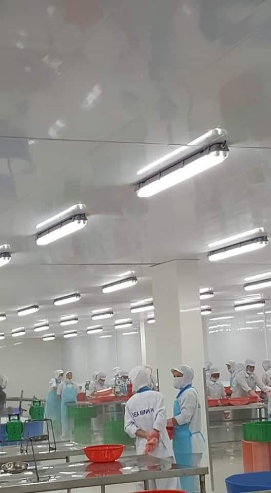 tấm trần nhựa cho nhà máy thủy hải sản